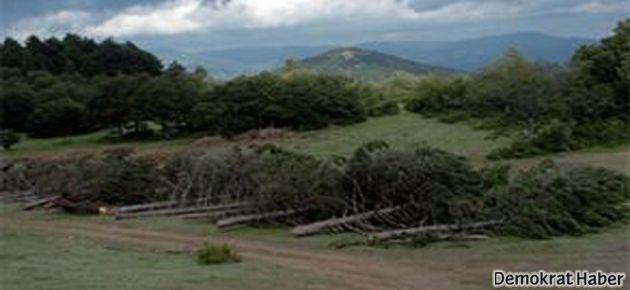 Abant'ta 100 bin ağaç kesilecek