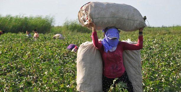 Ağrı'da mevsimlik göç, BDP'den 1 Haziran için kampanya