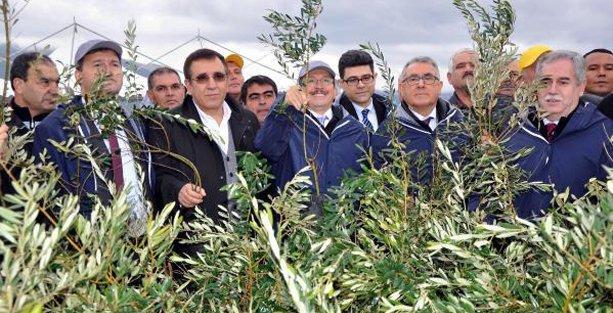 AKP'li vekil : Bu santral Soma'ya ve aynı yere yapılacak