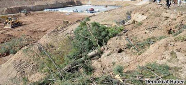 Ankara'daki ağaç katliamına suç duyurusu