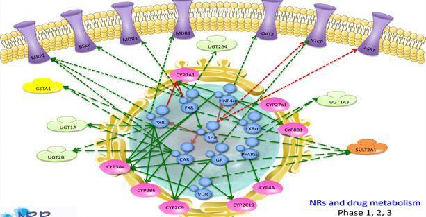 Araştırmacılar yanlışlıkla hücre olmaksızın metabolizma yarattılar!