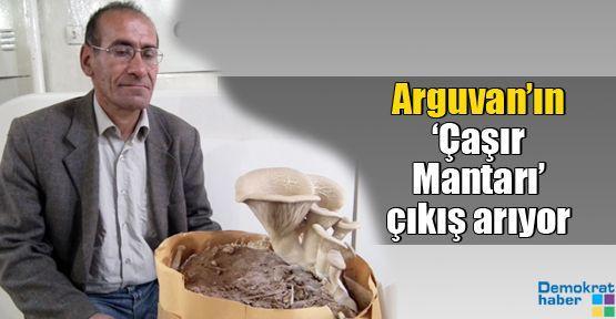 Arguvan'ın 'Çaşır Mantarı' çıkış arıyor