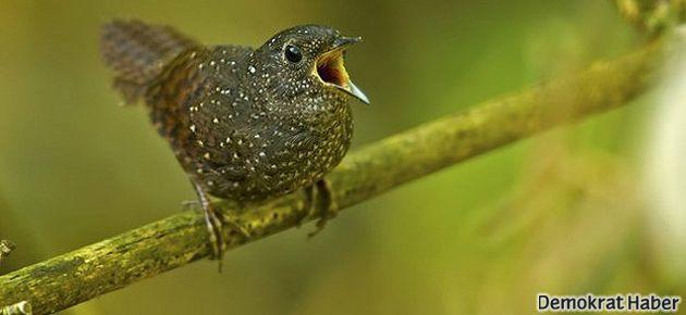 Asya'da yeni bir kuş türü keşfedildi