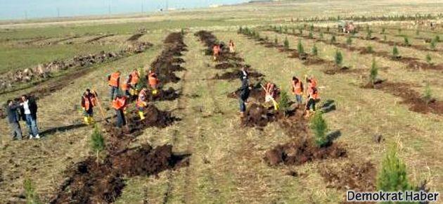 Diyarbakır Kent Ormanı TOKİ'ye devrediliyor!