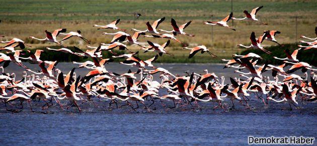 Kuş cenneti Erçek Gölü avlanma sahası ilan edildi!
