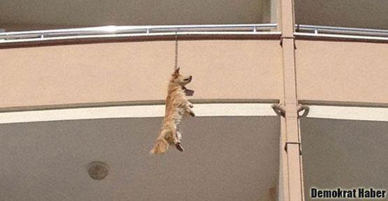 Balkonda asılı bulunan köpeğe otopsi yapılacak