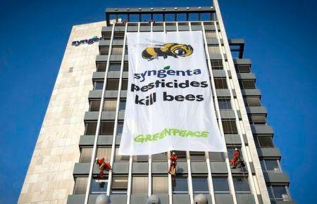 Basel'de Greenpeace'ten arılar için eylem