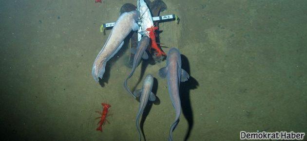 Bilinmeyen denizlerden ilk görüntüler