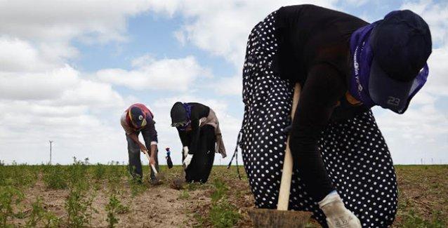 'Bitmeyen Hasat': Fotoğraflarla mevsimlik tarım işçilerinin yolculuğu