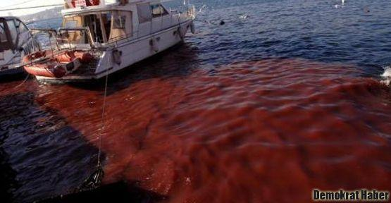 Boğaz'ın suları kandan kırmızıya döndü