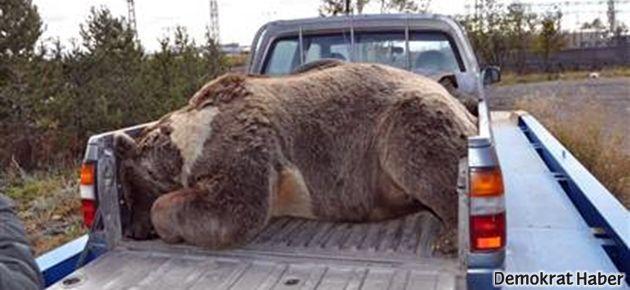 Boz ayıyı öldürenlere 22'şer bin lira ceza