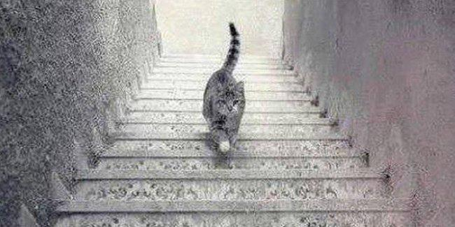 Bu kedi merdivenden iniyor mu yoksa çıkıyor mu?