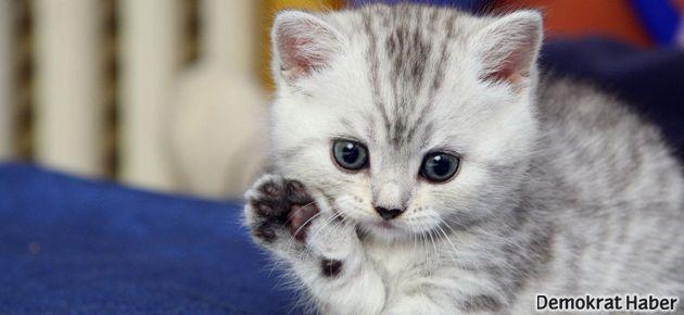 Bugün 'Dünya Kediler Günü'