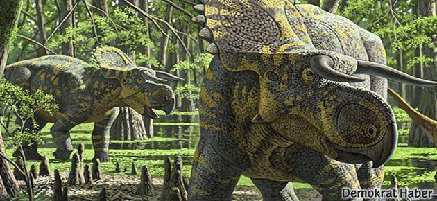 Büyük burunlu, boynuz suratlı dinozor