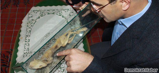 Cami inşaatında gizemli fosil