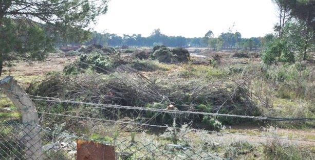 ÇED yönetmeliği değişti, golf sahaları için ağaç kesimi başladı