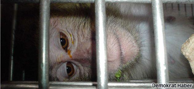 China Southern Havayolları da maymun taşımayı bıraktı
