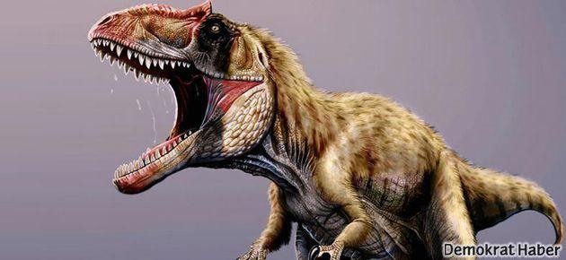 Dev dinozor fosili bulundu