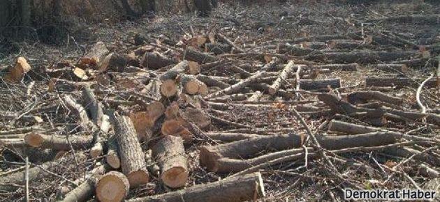 Dicle Üniversitesi arazisinde ağaç katliamı