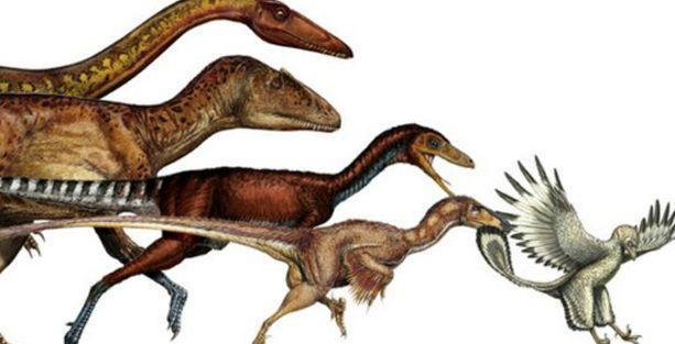 Dinozorlar 50 milyon yılda kuşa dönüştü