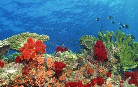 Doğal hayatta toplam 8,7 milyon tür yaşıyor