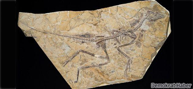 Dünyanın en eski kuşu bulundu: Aurornis xui