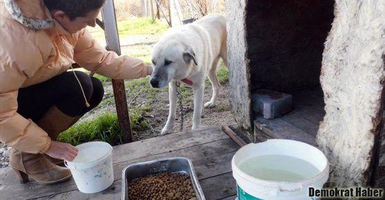 Ekşi Sözlük, Fatih Altaylı'nın parasını hayvanlara yedirdi