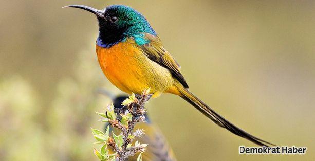 Elektrikli aletler kuşların göçlerini sekteye uğratıyor