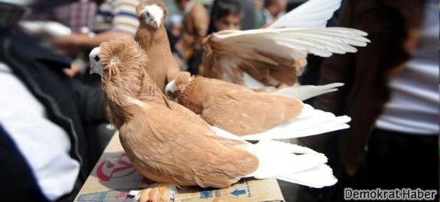 Erbil pazarında nadide kuşlar