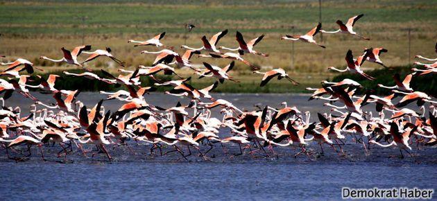 Erçek Gölü'nde avlanma kararına çevrecilerden tepki