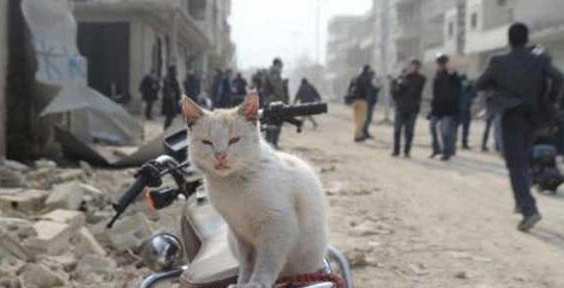 Eski Kobani 'anıt kente' dönüştürülecek