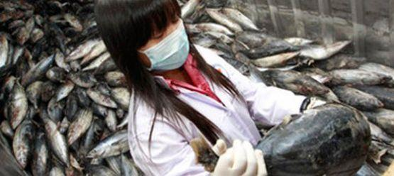 Fukuşima'daki balıklarda 258 kat fazla radyasyon çıktı
