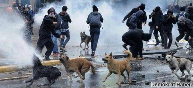 Gaz bombaları 8 köpek, 63 kedi, 1028 kuşu öldürdü
