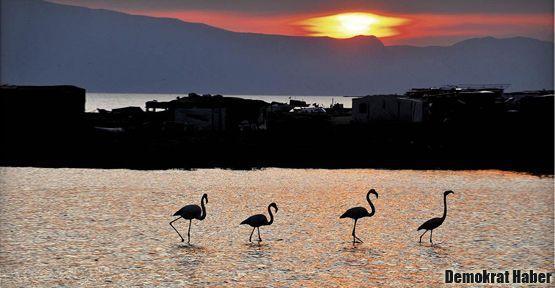Gediz Deltası'nda flamingoların zaferi