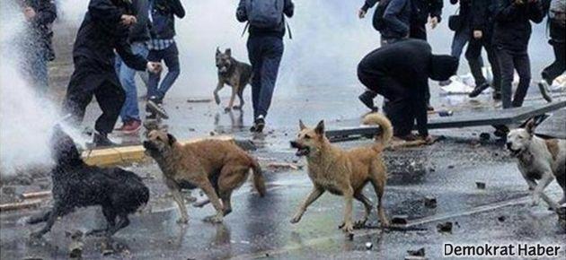 Gezi'de telef olan hayvanlar uluslararası mahkemede