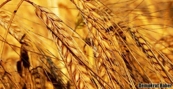 Gıda krizine 'Tohum Bankası' çözümü