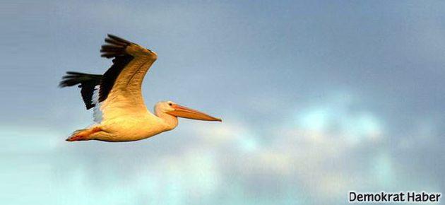 Göçmen kuşlar göçemeyebilir!