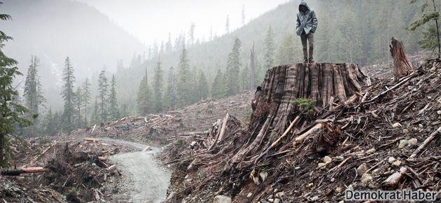 Greenpeace: Ormanlar kalkınma uğruna yok ediliyor