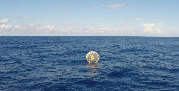 Hamster tekerleğiyle okyanusu aşmayı denedi
