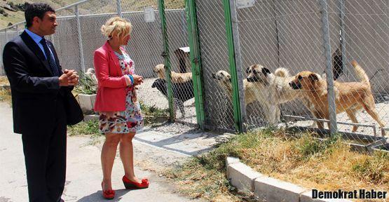 Hayvan hakları savunucuları sokağa çıkıyor