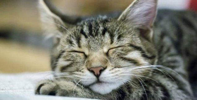 Hayvanlar rüyasında ne görür?