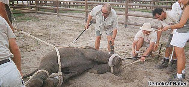 Hayvanlı sirkerin kapatılması için kampanya başlatıldı