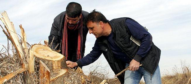 Hevsel'de ağaç kesimi durdu