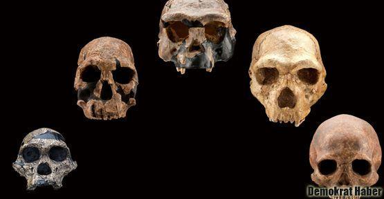İlk teknolojiyi Homo heidelbergensis'ten öğrendik