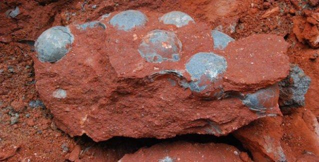İnşaatta 43 dinozor yumurtası bulundu