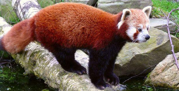 İnsanlar 500 yılda 322 hayvan türünü yok etti