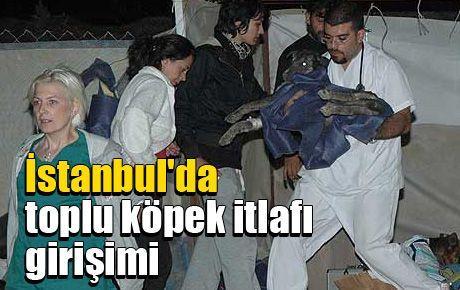 İstanbul'da toplu köpek itlafı girişimi