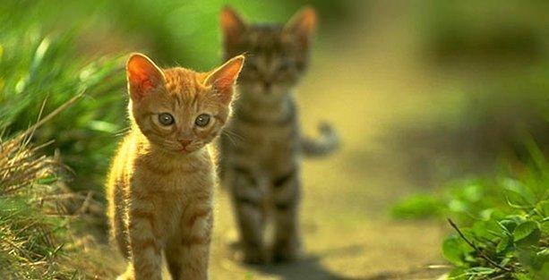 İTÜ'den tutanak savunması: Kedileri severiz, derdimiz hijyen