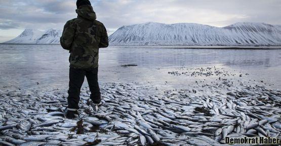 İzlanda'da 30 bin ton balık kıyıya vurdu