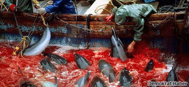 Japonya'da yunus avına karşı eylem